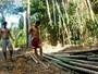 Americano quer instalar fábrica de painéis de bambu no Acre