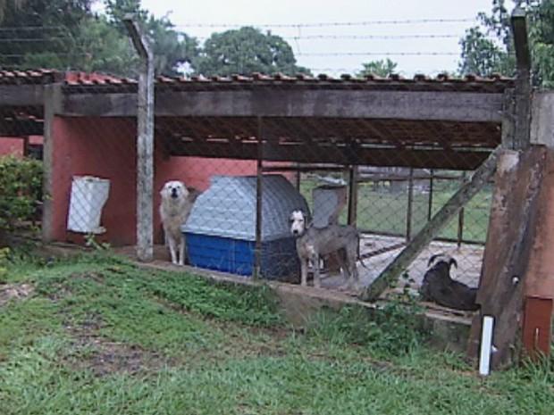 Animais foram encontrados em situação caótica, segundo ONG (Foto: Reprodução TV/Tem)