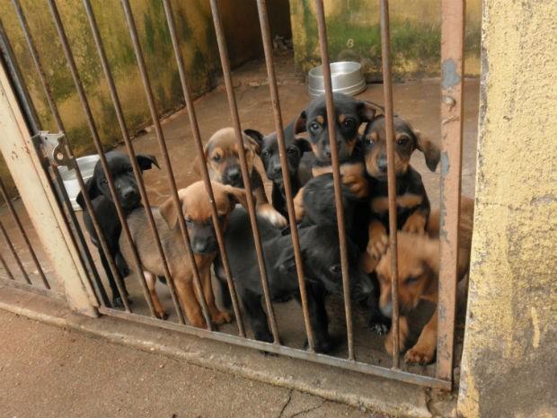 Canil municipal tem capacidade para 80 cachorros, mas atualmente abriga 140 animais. (Foto: Divulgação/Ong Patas)