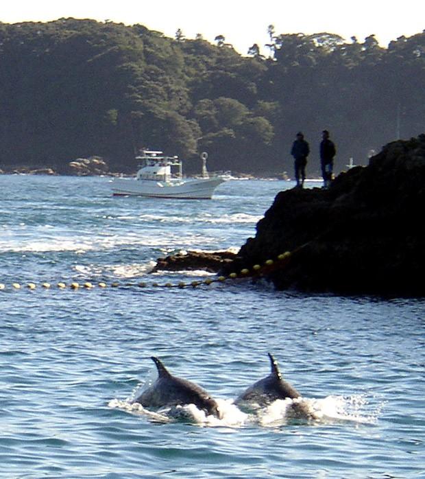 Foto de arquivo de novembro de 2003 mostra golfinhos sendo reunidos por barcos de pesca perto da cidade de Taiji, no Japão  (Foto: Ryan Nakashima/AFP Photo)