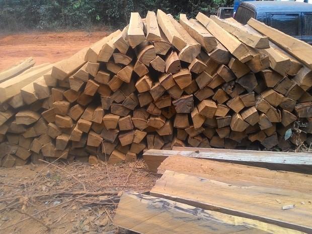 PF e Ibama apreenderam cerca de 250 m³ de madeira extraída ilegalmente (Foto: Polícia Federal/Divulgação)