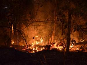 Bombeiros não sabem o que causou os incêndios (Foto: Walter Paparazzo/G1)