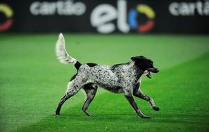 cachorro invasão CORINTHIANS X CORITIBA (Foto: Marcos Ribolli)