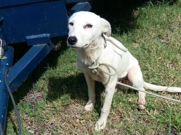 Homem de 47 anos foi detido por abandonar dois cachorros perto da BR-153, em Bagé (RS) (Foto: PRF/Divulgação)
