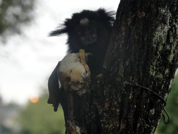 Ambientalista explicou que corte das árvores prejudica a alimentação dos saguis (Foto: Eduardo Guidini/ G1)