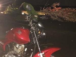 Motociclista caiu após bater em um coqueiro que estava caído (Foto: Mariane Peres/G1)