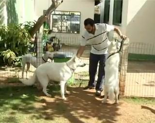 'Dicão'; Mel, cachorra da Apresentadora do Revista aprende a conviver com outros cães (Foto: Reprodução Rio Sul Revista)