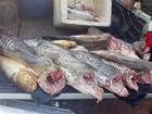 Polícia apreende 200 kg de peixe e prende um por pesca ilegal em MT