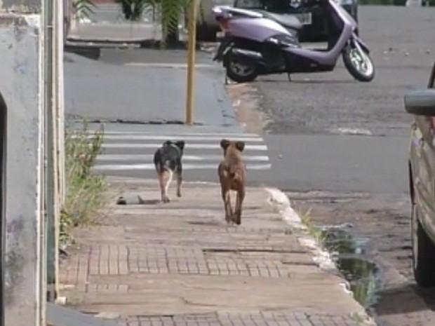 Animais abandonados são encontrados por toda a cidade (Foto: Reprodução/TV TEM)