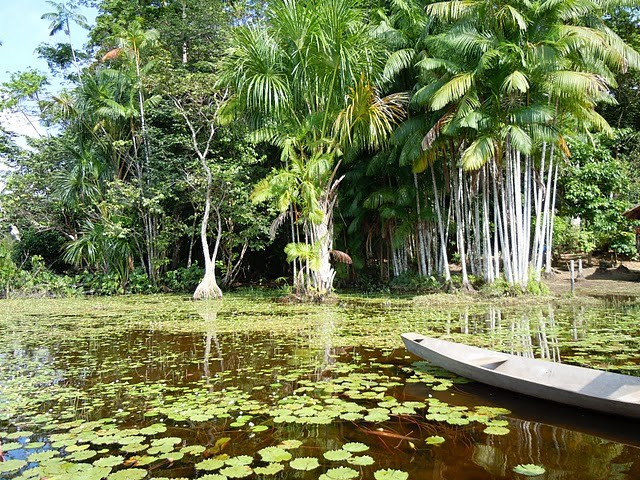 Amazônia rio com plantas (Foto: Ana Castro - produtora de reportagem (TV Globo))