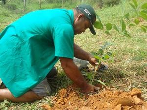 Plantio de árvores nos arredores das nacentes também faz parte do projeto de preservação (Foto: Prefeitura de Muriaé/Divulgação)
