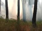 Bombeiros apagam fogo em área de cerrado próxima à Torre de TV Digital