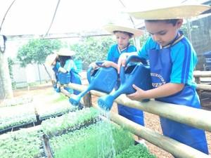 Alunos do município e comunidade escolar cuidam da plantação (Foto: Graziela Rezende/G1 MS)