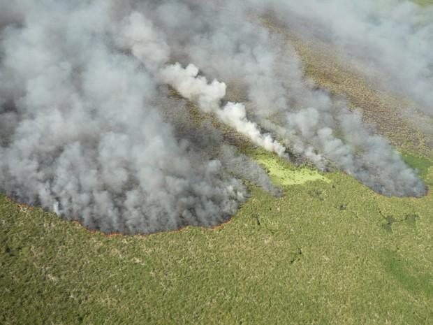 Incêndio Taim2 (Foto: Divulgação/ESEC TAIM)