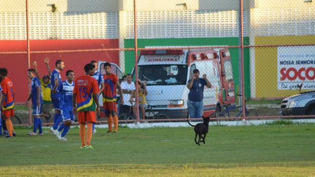 Caozinho interrompeu por alguns minutos a partida (Foto: Felipe Martins/GLOBOESPORTE.COM)