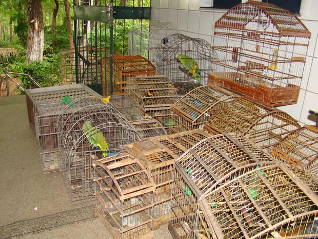 Pássaros eram mantidos em cativeiro e sofriam maus tratos (Fot Gil Oliveira/ G1)
