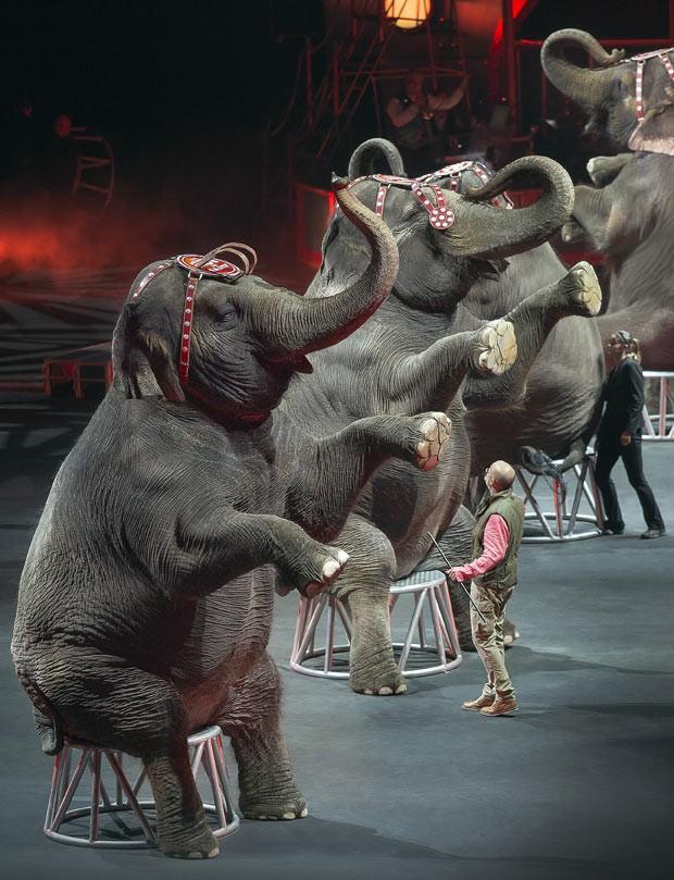 Elefantes participam de apresentação do Circo Ringling Bros. and Barnum & Bailey  (Foto: AP Photo/Feld Entertainment Inc., Gary Bogdon)