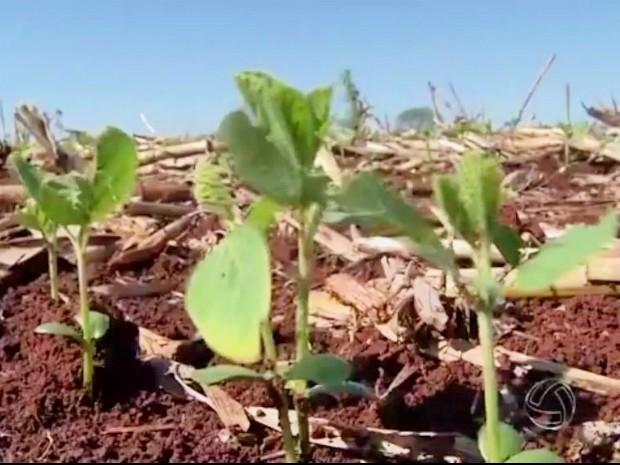 Plantio da nova safra de soja já foi iniciado em Mato Grosso do Slu (Foto: Reprodução/TV Morena)