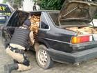 Polícia flagra carro carregado com 600 Kg de palmito in natura na Dutra