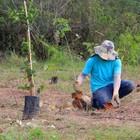 Semae inicia plantio de 3,9 mil mudas de árvores em parques e ETE Cezar de Souza