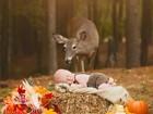 Veado protagoniza Photobomb curioso em foto de bebê nos EUA