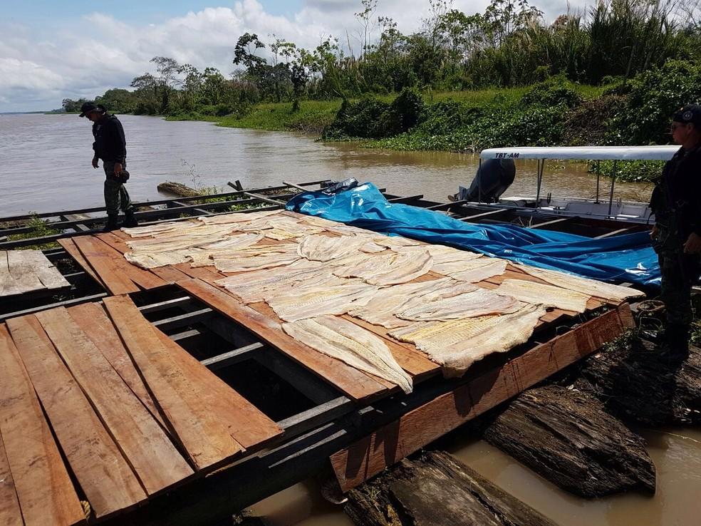 Pescado estava dentro de uma embarcação próximo à comunidade rural Sacambu (Foto: Polícia Civil)