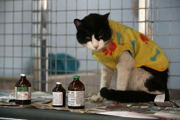 Gato é visto em meio a medicamentos na casa da enfermeira peruana Maria Torero (Foto: Martin Mejia/AP)