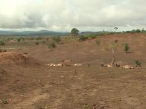 Seca na cidade de Planalto, sudoeste da Bahia.  (Foto: Reprodução/ TV Sudoeste)
