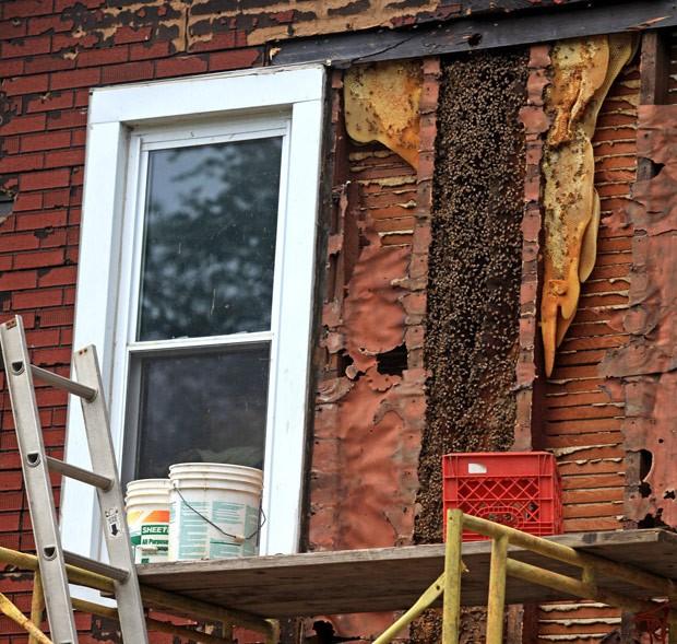Quase 1 milhão de abelhas foram retiradas de uma casa em Wallkill (Foto: Elaine A. Ruxton/Times Herald-Record/AP)