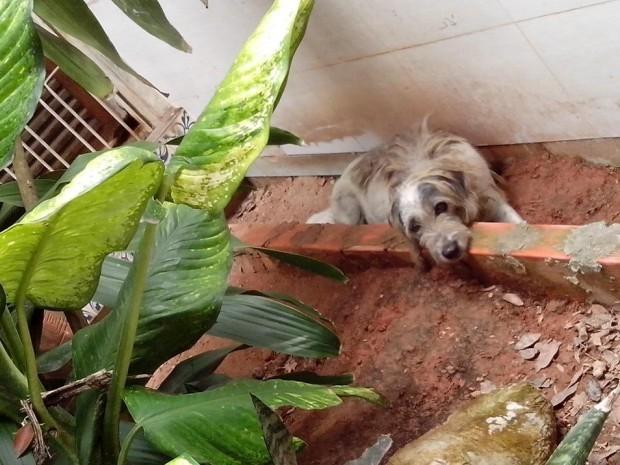 Um dos animais está doente e precisa de atendimento de um veterinário (Foto: Wesley Pereira / Arquivo Pessoal)