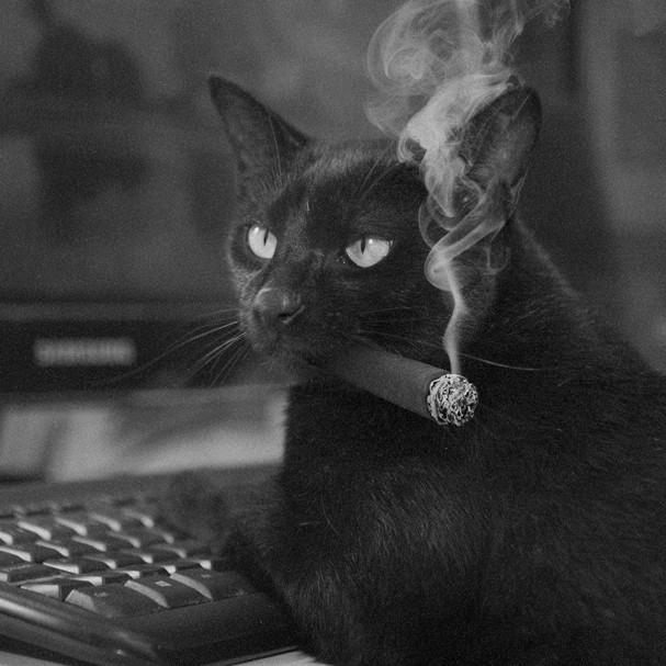 Lucky Gato Preto ganhou 18 promoções e provou que não, ele não dá azar! (Foto: Divulgação)