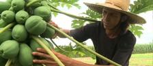 Conheça a história de um agricultor que apostou no plantio agroecológico (Reprodução/TV Gazeta)