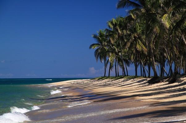 Em Alagoas, instituições como a associação de startups, a rede Anjos do Brasil e o Sebrae estão alinhados  (Foto: Shutterstock)