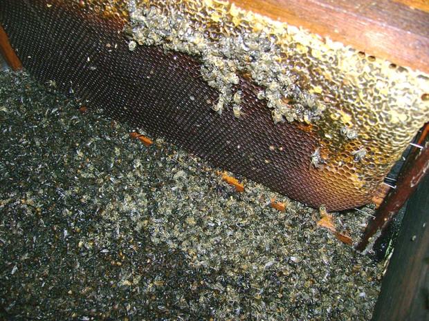 Segundo apicultores, abelhas morreram após fumacê (Foto: Eduardo Perez/Arquivo Pessoal)