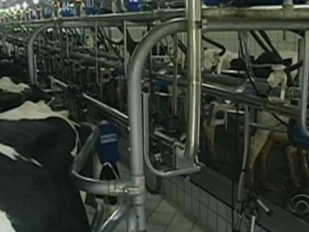 Coleta de leite foi interrompida em todo o estado por interrupção no transporte. (Foto: Reprodução/RBSTV)