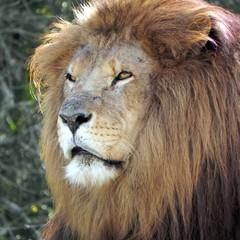 Leão IR Receita  (Foto: SXC)