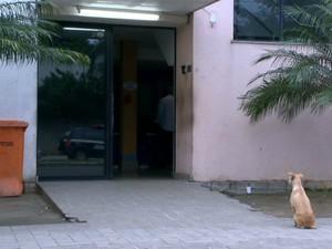 Cadela já espera por dono há mais de 12 horas (Foto: Reprodução/ TV Gazeta)