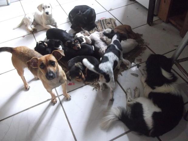 Ex-corretor de imóveis acolheu animais em sua casa em Taquara, RS (Foto: Arquivo pessoal)