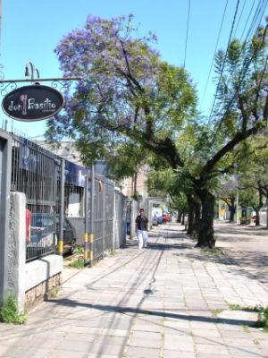 Árvores com clima de primavera colorem rua comercial (Foto: Luiza Carneiro/ RBS TV)