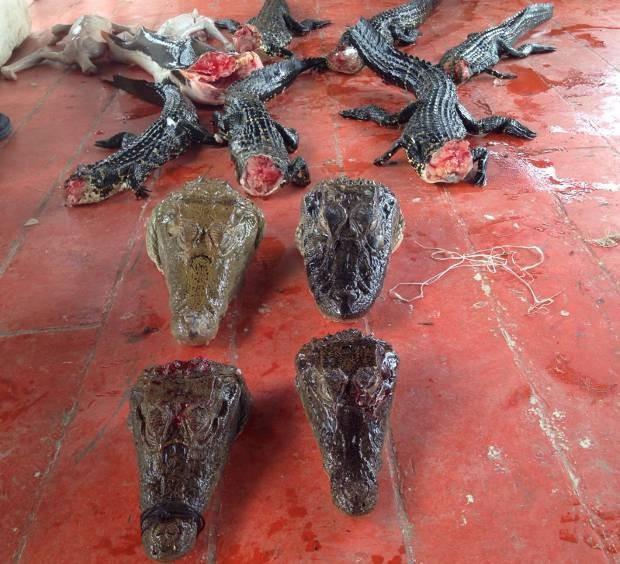 Embarcação fazia o transporte ilegal de animais silvestres mortos e vivos.  (Foto: Divulgação/ Polícia Civil)