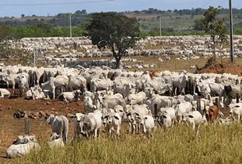 Criação de gado em Mato Grosso (Foto: Josi Pettengill/Secom/MT)