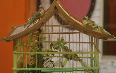Transforme gaiolas antigas em peças de decoração