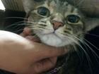 Veja onde vacinar seu cão e gato contra raiva em Belém