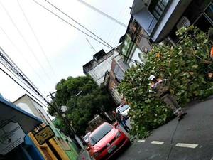 Árvore tombou na Rua Joaquim Sarmento (Foto: Reprodução/Manaustrans)