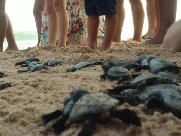 Após serem soltas, tartaruguinhas foram em direção ao mar sob olhares curiosos (Foto: Lucas Leite/ G1)