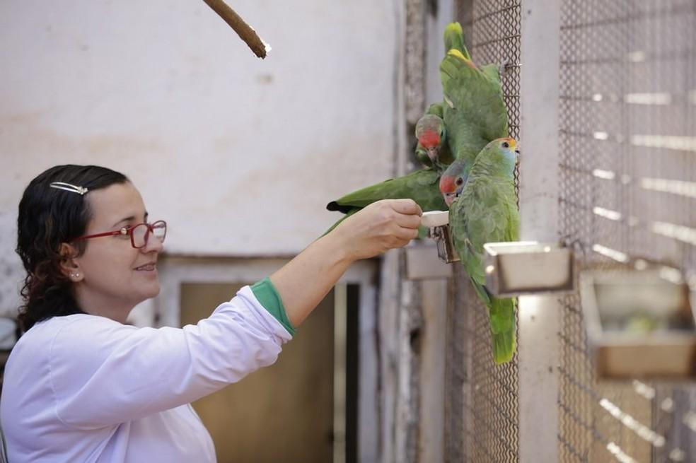 Erica conta que existem outras aves no viveiro, como o papagaio Rodocorita (Foto: Instituto Pauxi Mitu / Divulgação )