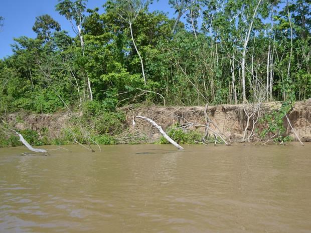 Árvores são levadas quando terra cai. (Foto: Karla Lima/G1)