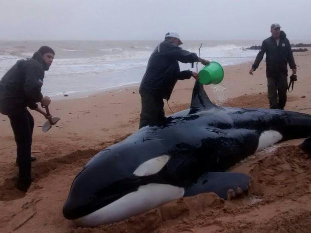 Populares ajudam a manter animal vivo até chegada de órgãos ambientais (Foto: Aline Souza/ TV Gazeta)