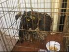 Coruja agredida é resgatada e levada para zoo de Dois Vizinhos, no Paraná