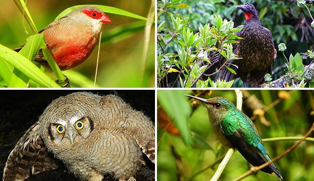 Aves Nova Friburgo (RJ) (Foto: Jalmirez da Silva/ Vc no TG)
